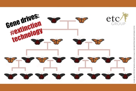 monarch_graphic_for_web.jpg